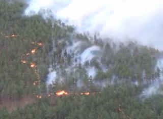 Пожар унищожи иглолистни култури в подножието на планина Беласица сн: regiona.bg