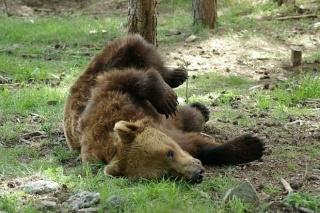 Изследват обитателите на парка за танциващи мечки сн: dariknews.bg